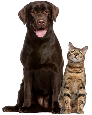 cat-and-dog-pictures-free